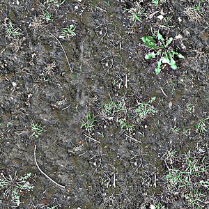 Dirt Weeds Texture 3D Model