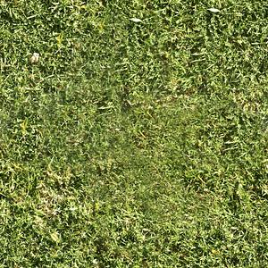 Grass Texture 3D Model