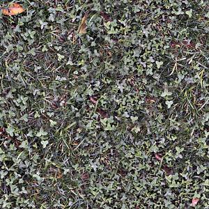 Grass Weeds Texture 3D Model