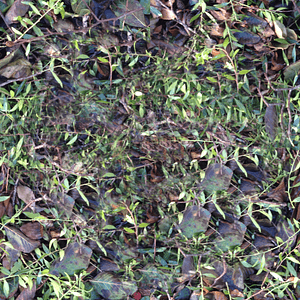 Leaves Texture 3D Model