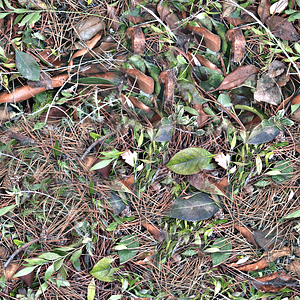 Leaves Twigs Texture 3D Model