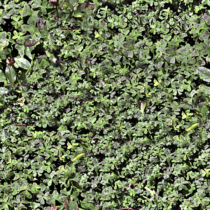 Leaves Weeds 3D Model