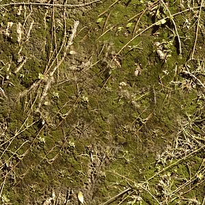 Moss Sticks Texture 3D Model