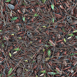 Forest soil with pine needles texture 3D Model