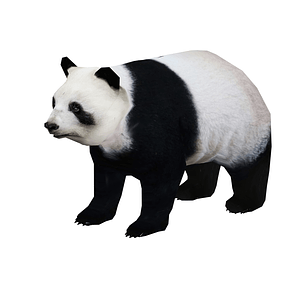 ジャイアントパンダ3Dモデル