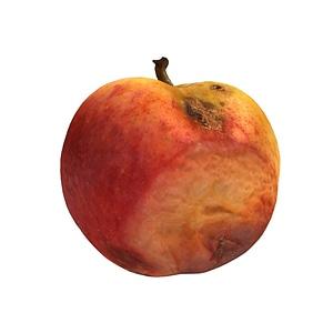 Rotten Apple 3D Model
