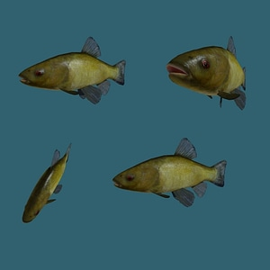Tench Fish 3D Model