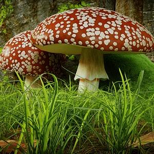Fly Agaric Mushroom 3D Model