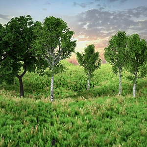 Grass and Trees 3D Model