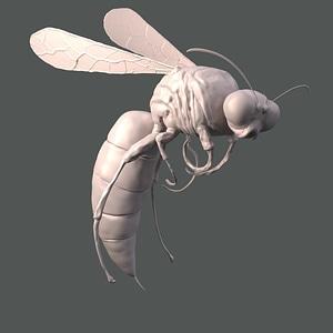 Wasp Sculpt 3D Model