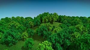 Green Trees 3D Model