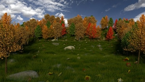 Meadow Scene 3D Model