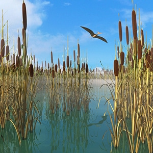 Reed, Cattail, Bulrush, Corn Dog Grass 3D Model
