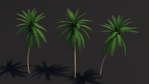 Palm Tree Cycles Ready 3D Model