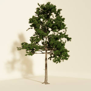 Pine Tree3Dモデル