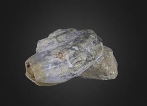 Gastropod Pleurotomaria 3D Model