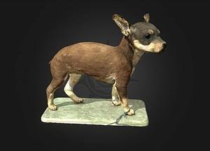Miniature Pinscher 3D Model