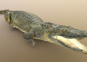 Black caiman 3D Model