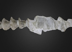 Archimedes wortheni 3D-malli
