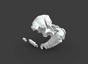 Odobenocetops peruvianus 3D-malli