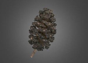 Alnus japonica cone 3D Model