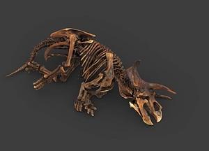 Triceratops Horridus Marsh 3D Model