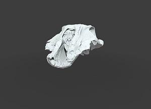 Allodelphis 3D Model