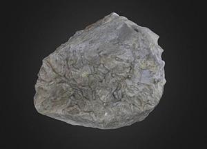 Favosites Tabulate coral 3D-malli