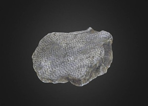 Polypora elliptica 3D-malli