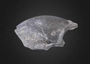 Megalonyx jeffersonii 3D-malli