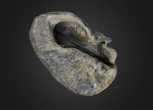 Whale ear bone 3D-malli