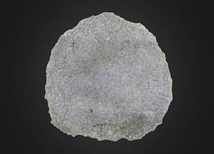 Sponge: Astraeospongium meniscus (PRI 76744) 3D Model
