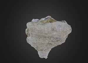Verruculina reussi Porifera 3D Model