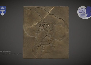 Archaeopteryx fossil cast 3D Model