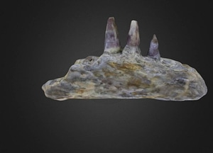 Amphibian jaw 3D-malli