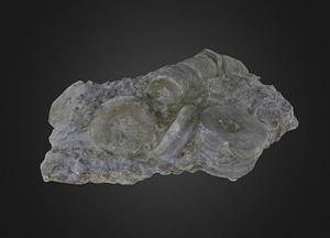 Crinoid stem segments 3D-malli