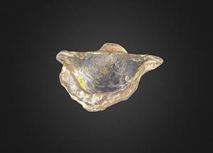 Horridonia horridus Brachiopod 3D Model