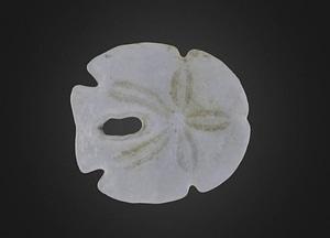 Echinoid Encope tamiamiensis 3D Model