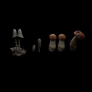 Set of Mushrooms 3D Model