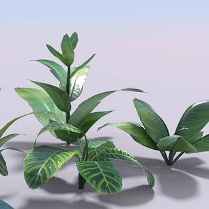 Simple Plants 3D Model