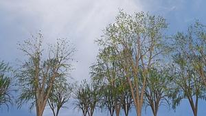 Trees Pack3Dモデル