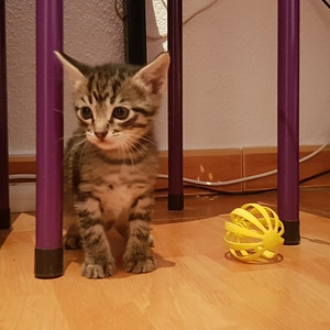 Kitty Cat Toy 3D Model
