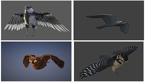 Set of Birds 3D Model