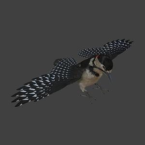 Woodpecker 3D Model