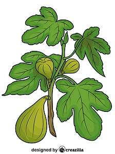 Figs on the Branch vector