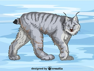 Canadian Lynx vector