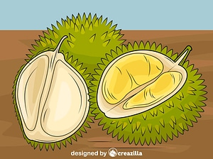 Durian Cut in Pieces vector