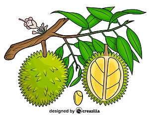 Durian on the Tree vector