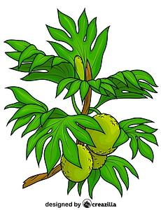 Breadfruit Tree vector