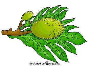 Breadfruit with a Leaf vector